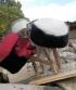 Chapeau DATCHA - mohair - 48 €